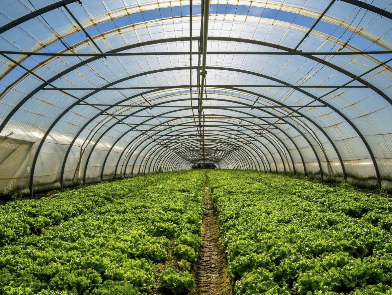 Florece el turismo agrícola